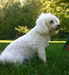 Pet Health Care — What To Do When You Can't Afford Vet Care.