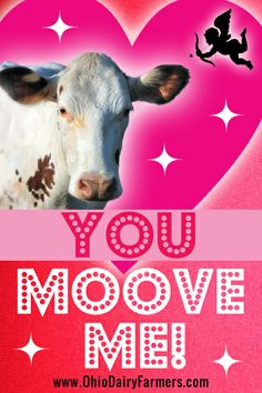 You MOOve Me! Love, Amelia, an Ayrshire dairy cow from Ohio