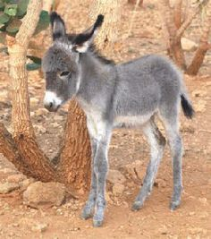 If you wonder what a donkey can eat, you can find all important feeding facts here. Take good care of your donkey with best information. Baby Donkey, Cute Donkey, Mini Donkey, Baby Cows, Baby Elephants, Cute Baby Animals, Farm Animals, Animals And Pets, Wild Animals