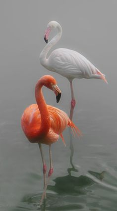 Flamingos (by Lena Painter)