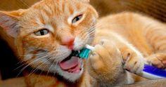 Cómo combatir el mal olor en los gatos