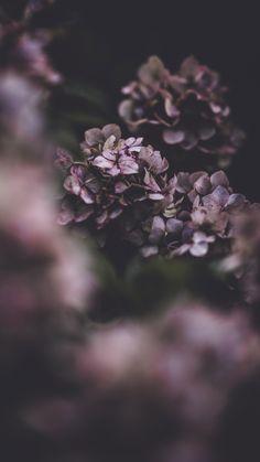 A good wallpaper Purple Flowers Wallpaper, Flower Iphone Wallpaper, Pastel Wallpaper, Aesthetic Iphone Wallpaper, Nature Wallpaper, Aesthetic Wallpapers, Wallpaper Backgrounds, Botanical Wallpaper, Cactus E Suculentas