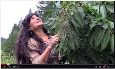 Elderberry wisdom with Rosemary Gladstar~new video!
