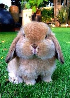 ♥ Small Pets ♥  bunny... look at those cheeks!