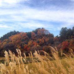 "@fivestar77777's photo: ""風が強いね… #紅葉#ススキ#青空#空#雲#筑北村#田舎"""