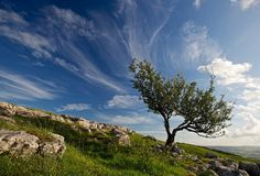 Tree and Clouds in Yorkshire Dales by dmass, via Flickr