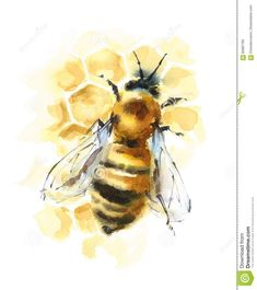 Honey Bee On The Honeycomb Watercolor Illustration Hand Drawn Stock Illustration . - Honey Bee On Honeycomb Watercolor Illustration Hand Drawn Stock Illustration – Image: 82897795 - Art Inspo, Painting Inspiration, Watercolor Animals, Watercolor Paintings, Watercolor Artists, Abstract Paintings, Oil Paintings, Landscape Paintings, Bee Painting