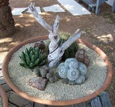 Delicate succulents make for a great miniature garden.