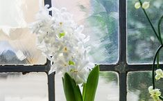 Perfume your living room the natural way! Grow some hyacinths on water and enjoy the scent. Forcing bulbs inside is really easy. European Garden, Garden Insects, Water Glass, Planting Bulbs, Bulb Flowers, Garden Planning, Indoor Plants, House Plants, Glass Vase