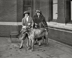 """January 26, 1923. Washington, D.C. """"Largest and smallest dog at dog show."""" Previously seen here. Harris & Ewing glass negative"""