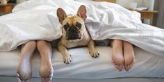 Motivos para não dividir a cama com seu cachorro