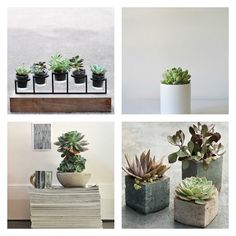 Artikel, Plants for your Interior, Succulent