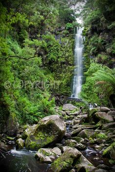 Erskine Falls. 30 metres of cascading beauty in the Otway National Park, Victoria, Australia. Images available for purchase at http://www.alysonmcgovern.com.au