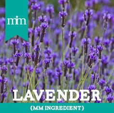 Lavender is one of the most powerful remedies in the plant world, and is used extensively with herbs and aromatherapy to cure aching muscles, stress and anxiety as well as insomnia. Lavender is a key ingredients in our MM products such as the Pearl Essence Creme Rinse and Euro Oil!-Morrocco Method #naturalshampoo #chemicalfree #glutenfree #Naturalhair #veganproduct #vegan #rawingredients
