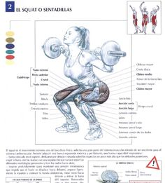 "healthylivingforyou: "" How to Squat With Proper Technique If you are working out in the gym and could only do one exercise it would be the squat. Because no other exercise challenges the human. Leg Anatomy, Muscle Anatomy, Butt Workout, Gym Workouts, Fitness Exercises, Workout Tips, Peroneus Longus, Tensor Fasciae Latae, Bench Press Workout"