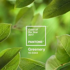 "Excited about Pantone color of the year...GREENERY! Pantone color of the year 2017...Greenery....a "" zesty yellow green shade that evokes the first days of spring."" Inspired by the desire to reconnect with nature. Symbolizes a new beginning.  COMING SOON...Pantone color of the year 2017....GREENERY PREVIEW! www.creationsbytoni.etsy.com or www.creationsbytonimbrundage.com #FreeShippingInUS #freegiftwithpurchase🎁 #sale #bohojewelry #accessories #womensfashion #giftsforher #jewelry #etsyseller…"