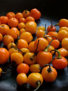 Fonte:http://comidinhasdobem.blogspot.com.br/2011/12/apimentando.html