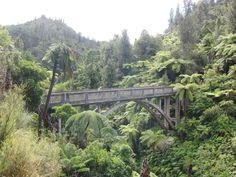 Te Kuiti to Whanganui | Cycle Tour New Zealand