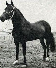 CABALLOS COLOMBIANOS: CABALLOS HISTORICOS DEL PASO FINO COLOMBIANO Beautiful Horses, Brio, Animals, Horses, Dark, Xmas, Pretty Horses, Animales, Animaux