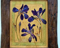 presiona flor arte, herbario, presionado flores Marcos, 13, 5 x 11, 5 pulgadas (34 x 30 cm) plantas de prensado, marco de hierbas secas, antiguo soporte de la planta