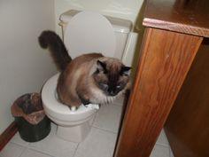 tucker on the pot