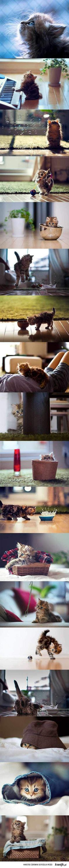 A day in the life of a kitten.  Sweet.