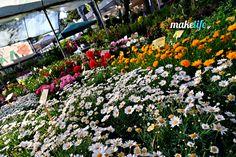 8 ιδανικά λουλούδια για το μπαλκόνι μου μόνο με 16 ευρώ Gelato Shop, Diy Room Decor, Good To Know, Diy And Crafts, Greek, Backyard, Flowers, Plants, Gardening