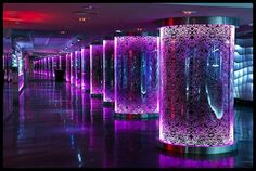 purple night club