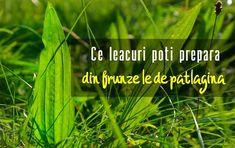 Herbs, Medicine, Varicose Veins, Plant, Health, Herb, Medicinal Plants