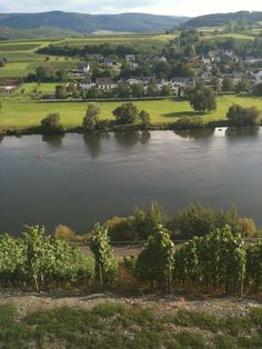 Mosel.best wine area in the world