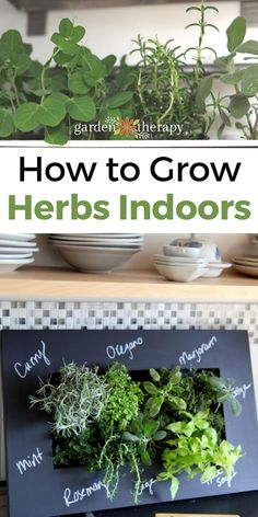 This article will give you a healthy dose of realistic expectations for indoor herbs and the knowledge to create beautiful indoor herb gardens that will survive and THRIVE. #gardentherapy #gardening #herbs #indoorgardening #gardentips Indoor Herbs, Herbs Indoors, Growing Herbs, Herb Garden, Garden Projects, Gardening Tips, Therapy, Knowledge, Gardens