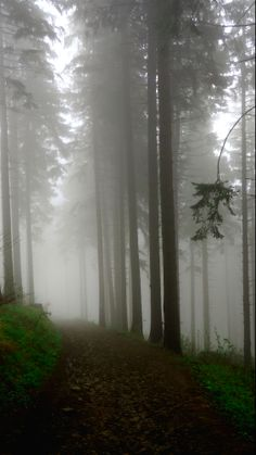 somewhere in Polish forest. Misty Forest, Forest Path, Pea Soup, Winding Road, Wooden Hearts, Walkway, Decoration, Wilderness, Mists