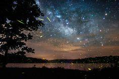 Vincent Bradley - Fireflies