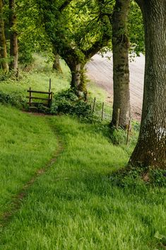 A Narrow Path leading to a Stile in Wiltshire, England ~ by peaflockster . Country Life, Country Roads, Summer Scenes, English Countryside, Nature Pictures, Pathways, Amazing Nature, Belle Photo, Beautiful Landscapes