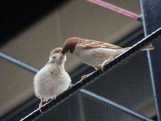 「すずめっ子」記事の画像