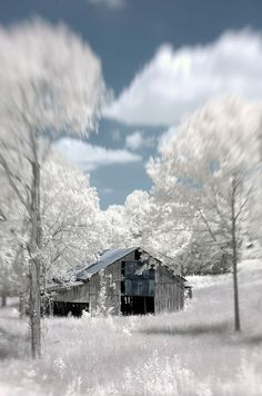 Photo by David Morel This was shot with a IR converted d70 and a Lensbaby 3G lens. #seeinanewway #Lensbaby
