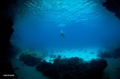103 best curacao travel guide the western side of curacao images rh pinterest com