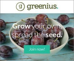 greenius banner ad