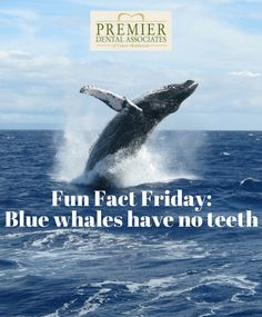 Did you know that blue whales do not have any teeth #dentalfacts