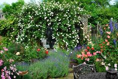 This pergola, nearly engulfed by 'New Dawn' roses, serves as a perch for songbirds and hides the garage from view.