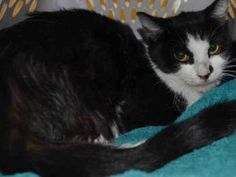 WOUND ON INNER LEFT HIND LEG - 2 YRS OLD - DEHYDRATED -