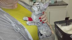 Cats, Animals, Baby Kitty, Gatos, Animales, Animaux, Kitty, Cat, Cats And Kittens