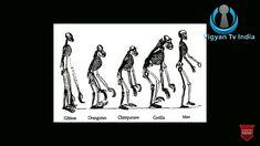 Human Evolution, Orangutan, Memes, Meme