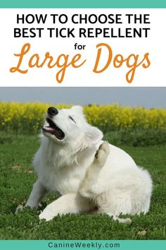 Learning how to protect your dogs from tick bites is the best option. This post will guide you How to Choose the Best Tick Repellent for Your Big Dog. Big Dogs, Large Dogs, Cute Dogs, Alone, Tick Repellent For Dogs, Stop Dog Barking, Dog Health Tips, Dog Care Tips, Pet Care