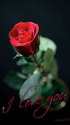 Red roses for you I Love You Images, Love You Gif, Love You More, My Love, Beautiful Gif, Beautiful Roses, Beautiful Flowers, Beautiful Pictures, Foto Text