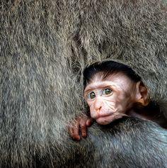Evocative Wildlife Photo Contest - ViewBug.com