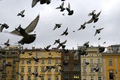 basically how I remember the market square of Krakow: birds and colorful buildings.