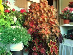 Floral Wreath, Wreaths, Fall, Garden, Plants, Diy, Home Decor, Autumn, Floral Crown