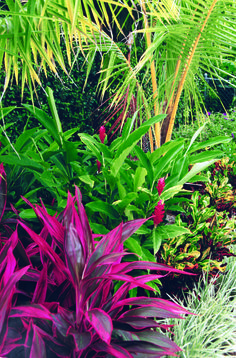 This tropical landscape in Boca Raton, Florida features ti plants, ginger, coconut palms, variegate liriope and crotons. See more south Florida gardens at www.pamela-crawford.com. Servicing all of Palm Beach county, including Boca Raton, Delray Beach, Wellington, town of Palm Beach, Palm Beach Gardens, and Jupiter.