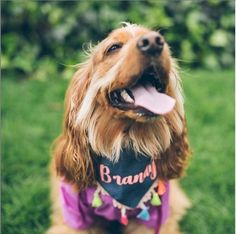 💖BRANDY 💋es amor 💕 dulzura 😘alegria 😀picardia 🤪 y sus papás humanos 💑lo saben y les encanta 👏🐾❣️🥰 @brandy_the_cocker . El cocker es un perro compacto, deportivo y atlético, suele ser dulce y tierno con sus familiares. Es muy fiel y atento. Animals, Amor, Sporty, Athlete, Sweet, Pets, Dogs, Pictures, Animales